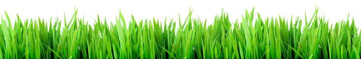 fresh grass for background