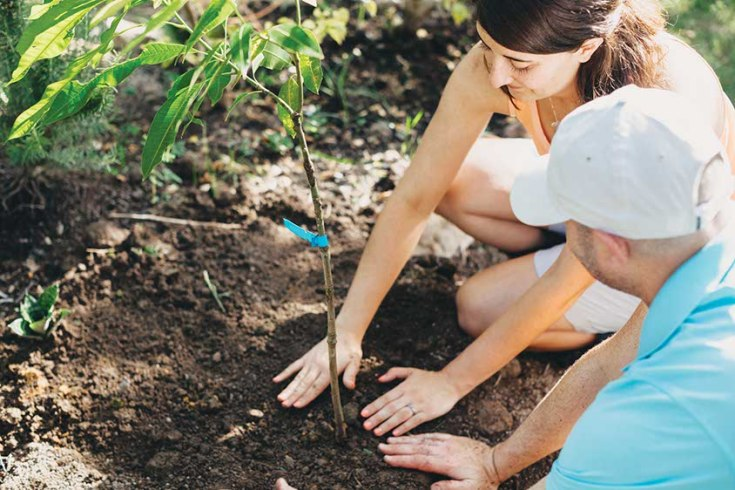 Couple Planting Young Tree